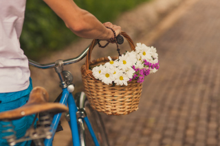 Flowers In Bicycle Basket Background for Android, iPhone and iPad
