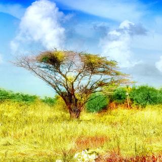 Savanna in Namibia - Obrázkek zdarma pro iPad mini 2