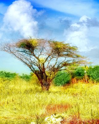Savanna in Namibia - Obrázkek zdarma pro Nokia 300 Asha