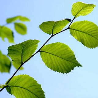 Green Leaf - Obrázkek zdarma pro iPad 2