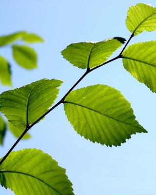Green Leaf - Obrázkek zdarma pro 768x1280