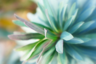 Teal Flower Picture for Android, iPhone and iPad
