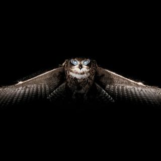 Owl - Obrázkek zdarma pro 1024x1024