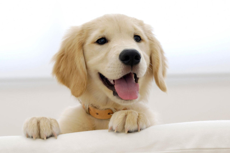 природа белая собака животное улыбка  № 1423876 без смс