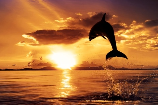 Dolphin Background for Android, iPhone and iPad