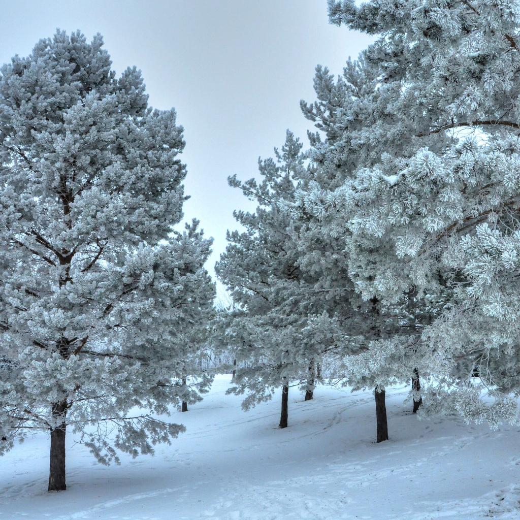 winter landscape wallpaper for ipad mini