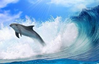 Dolphin Background for Desktop 1920x1080 Full HD