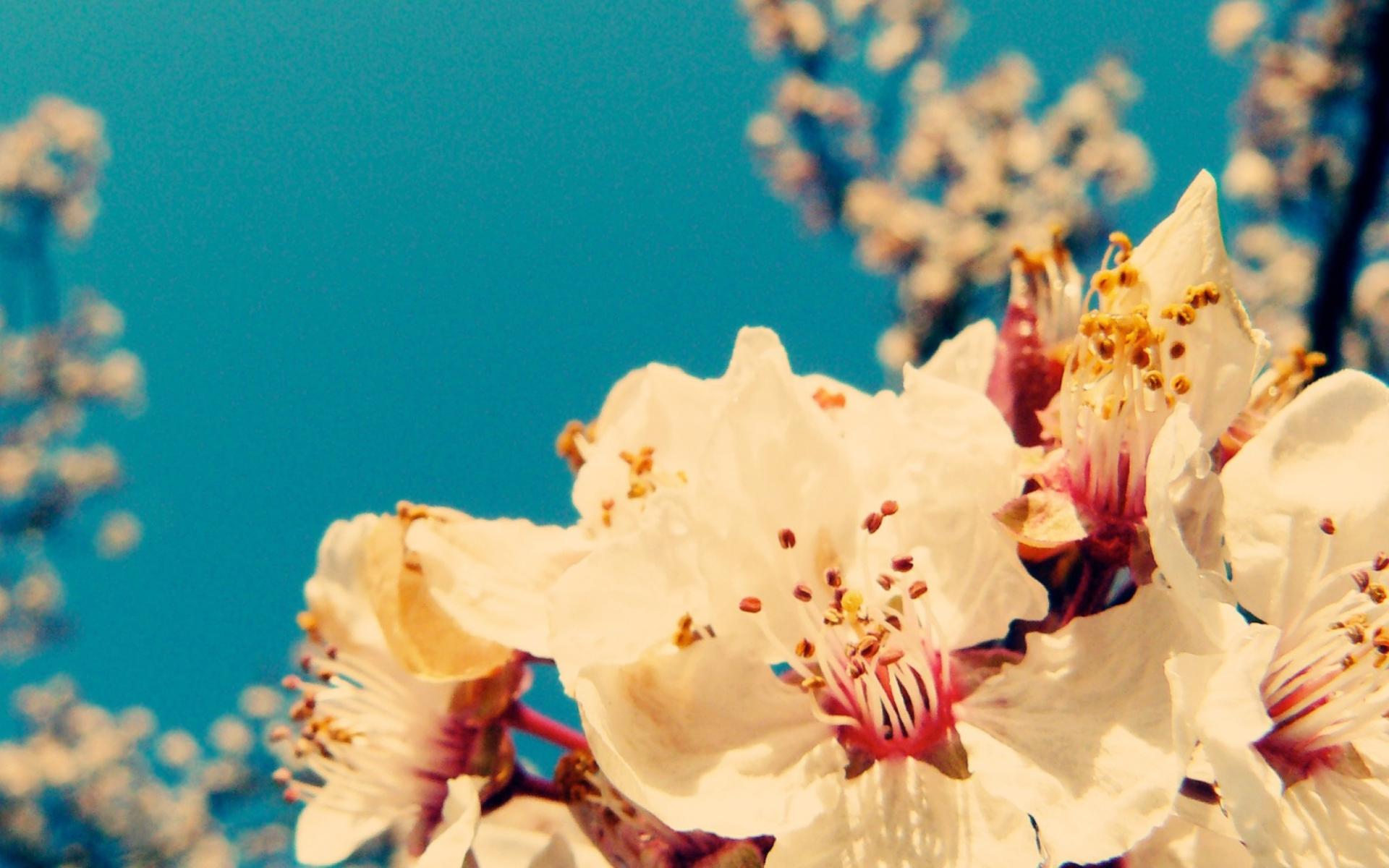 Cherry vintage flowers fondos de pantalla gratis para for Imagenes full hd para fondo de pantalla