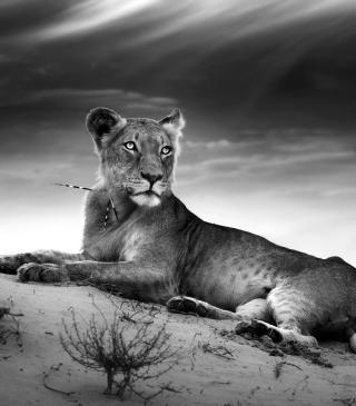 Lioness - Obrázkek zdarma pro 240x432