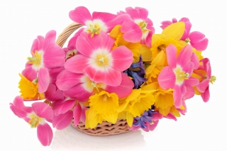 Indoor Basket of Tulips and Daffodils Wallpaper for Android, iPhone and iPad