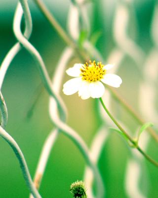 Macro flowers and Fence - Obrázkek zdarma pro 240x400