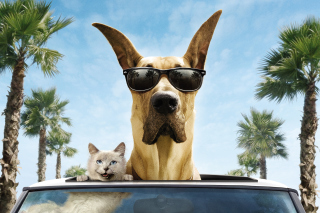 Funny Dog In Sunglasses Wallpaper for Android, iPhone and iPad