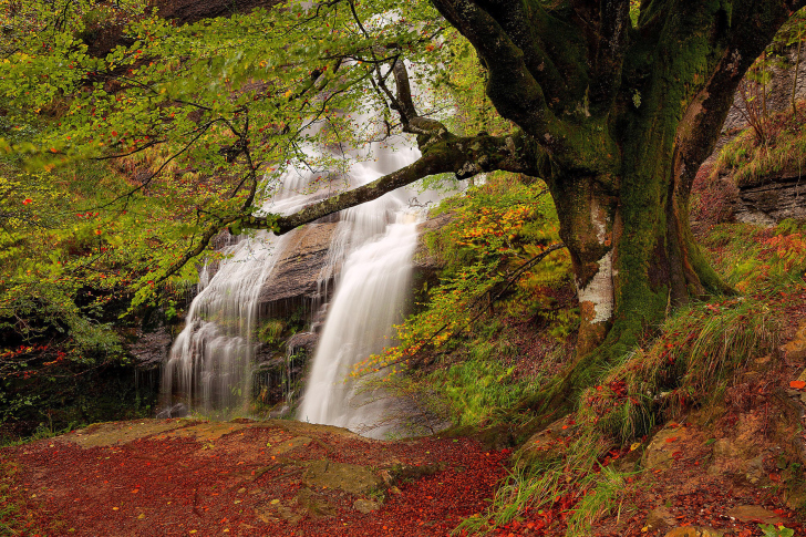 Path in autumn forest and waterfall wallpaper