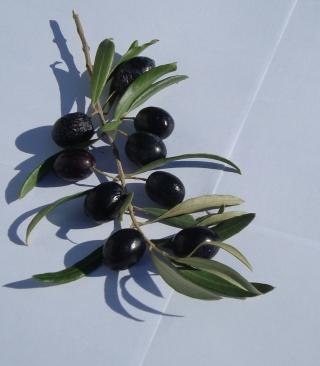 Olive Branch With Olives - Obrázkek zdarma pro Nokia C1-01