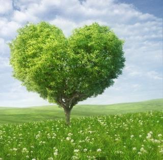 Nature Heart - Obrázkek zdarma pro iPad