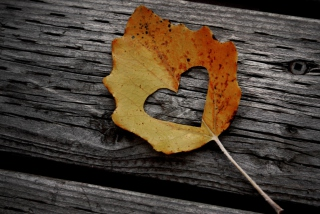 Free I Love Autumn Picture for Android, iPhone and iPad