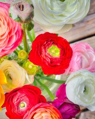Botanical old tea rose - Obrázkek zdarma pro Nokia Asha 309