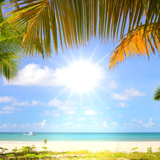 Summer Beach with Palms HD - Obrázkek zdarma pro 128x128