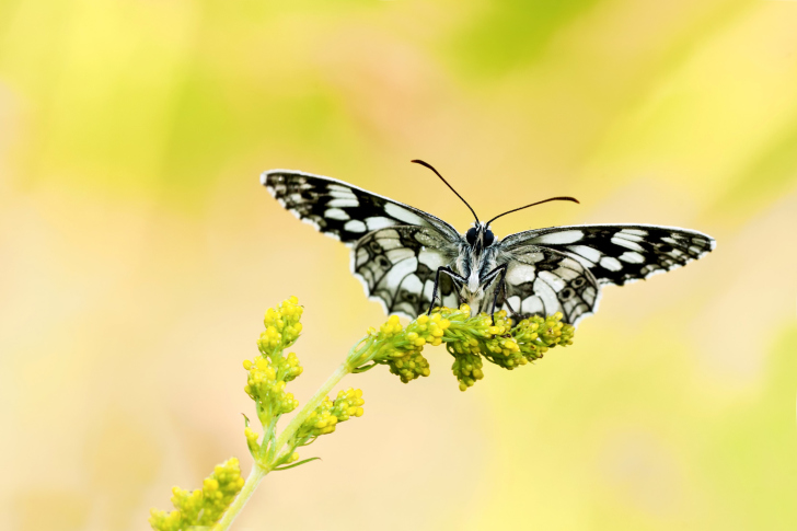 Yellow Butterfly Background wallpaper