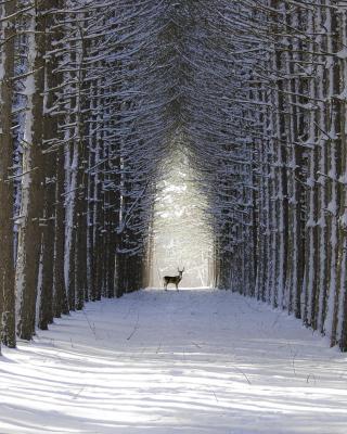 Spruce Winter Alley - Obrázkek zdarma pro Nokia X7