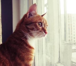 Red Cat - Obrázkek zdarma pro iPad Air