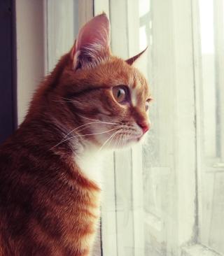Red Cat - Obrázkek zdarma pro Nokia Asha 308