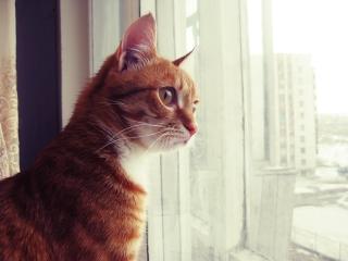 Red Cat - Obrázkek zdarma pro Fullscreen Desktop 800x600