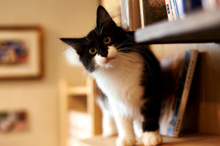 Typically furry cat sfondi gratuiti per cellulari Android, iPhone, iPad e desktop