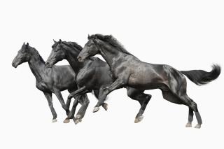 Black horses papel de parede para celular