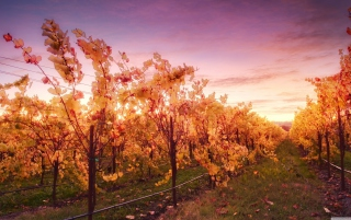 Sunset In Russian River Valley Background for Android, iPhone and iPad