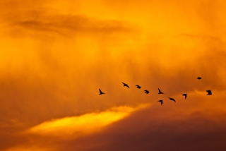 Free Orange Sky And Birds Picture for Android, iPhone and iPad