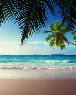 Sunshine in Tropics - Obrázkek zdarma pro 320x480