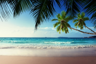 Sunshine in Tropics Background for Android, iPhone and iPad