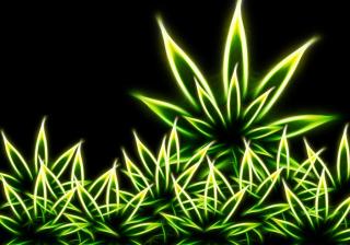 Marijuana - Obrázkek zdarma pro Samsung Galaxy Tab 2 10.1