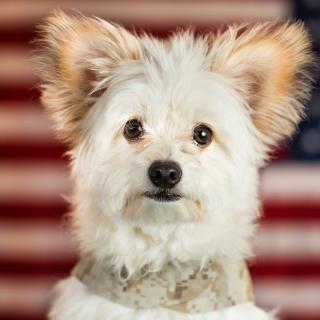 My Best Friend Dog - Obrázkek zdarma pro 2048x2048