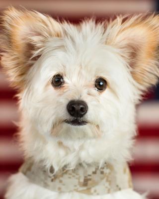 My Best Friend Dog - Obrázkek zdarma pro Nokia Lumia 1520