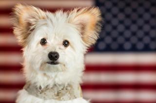 My Best Friend Dog - Obrázkek zdarma pro Fullscreen Desktop 1024x768