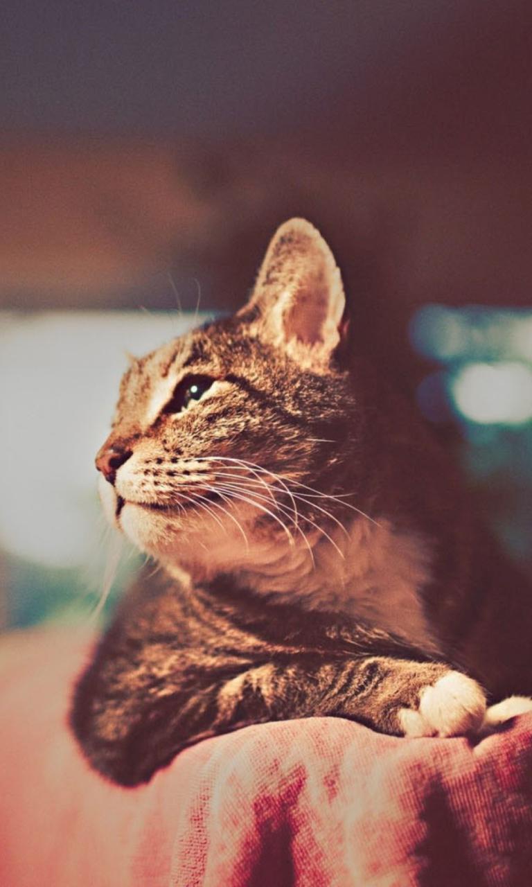 Коты на аву в вк фото