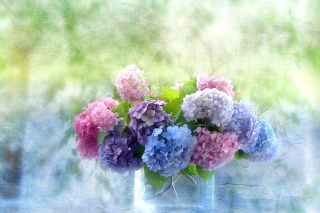 Hydrangeas Background for Android, iPhone and iPad