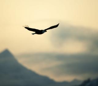 Eagle In The Sky - Obrázkek zdarma pro iPad 2