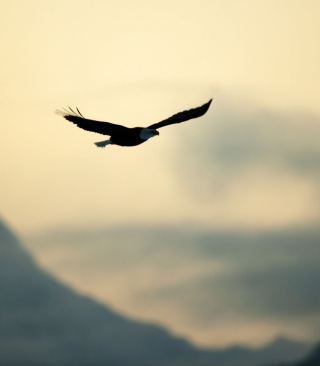 Eagle In The Sky - Obrázkek zdarma pro iPhone 5