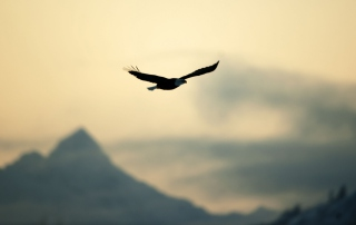 Eagle In The Sky Background for Android, iPhone and iPad