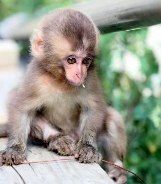 Baby Monkey - Obrázkek zdarma pro 480x640