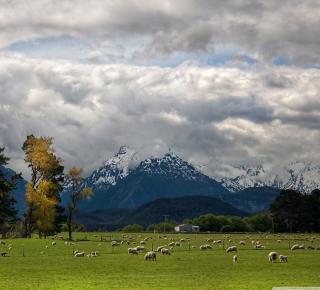 Sheeps On Green Field And Mountain View - Obrázkek zdarma pro 208x208