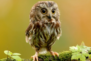 Owl free high definition wallpapers  MyHDWallpaperscom