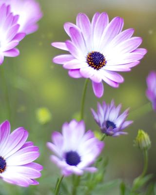 Summer Flowers - Obrázkek zdarma pro 240x400
