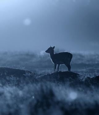 Baby Deer - Obrázkek zdarma pro Nokia X7