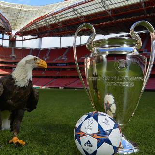 Estadio da Luz with UEFA Euro Cup - Obrázkek zdarma pro 320x320