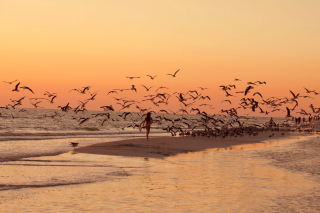 Walk With Seagulls Wallpaper for Android, iPhone and iPad