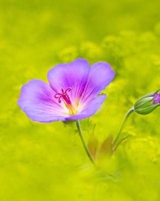 Single wildflower - Obrázkek zdarma pro iPhone 5